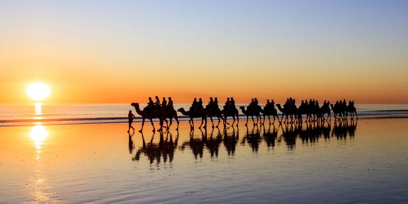 Camel sunset walk, Broome, WA